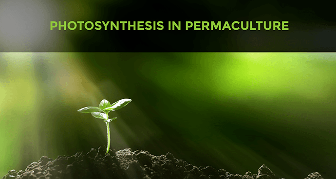 Photosynthesis In Permaculture Design