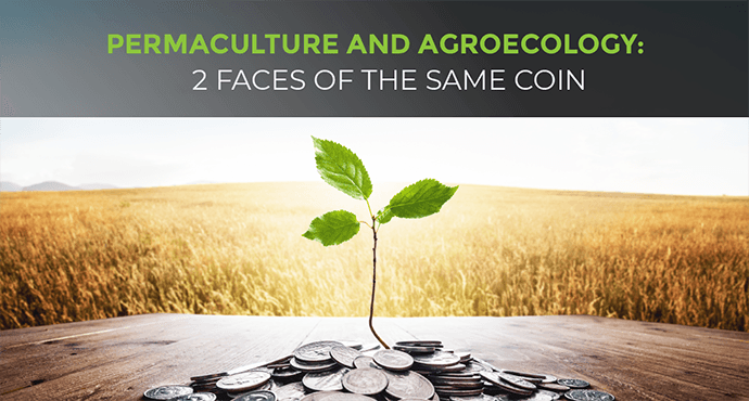 Permaculture and Agroecology: 2 Faces Of The Same Coin