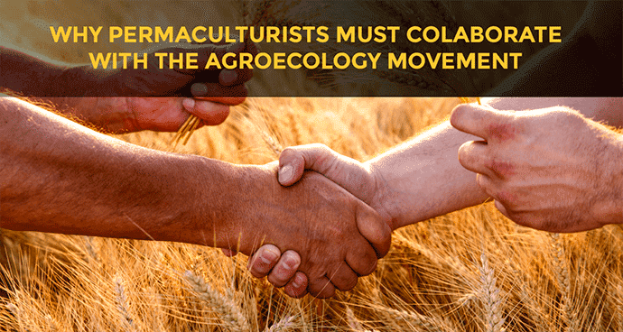 Why permaculturists must colaborate with the agroecology movement