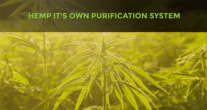 Hemp Purification System