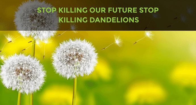Stop Killing Dandelions