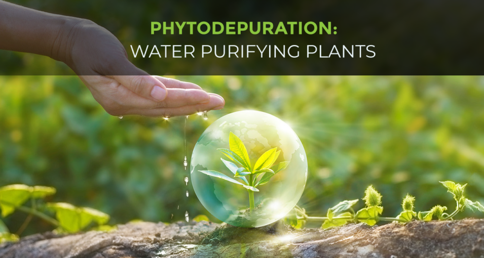Water Purifying Plants