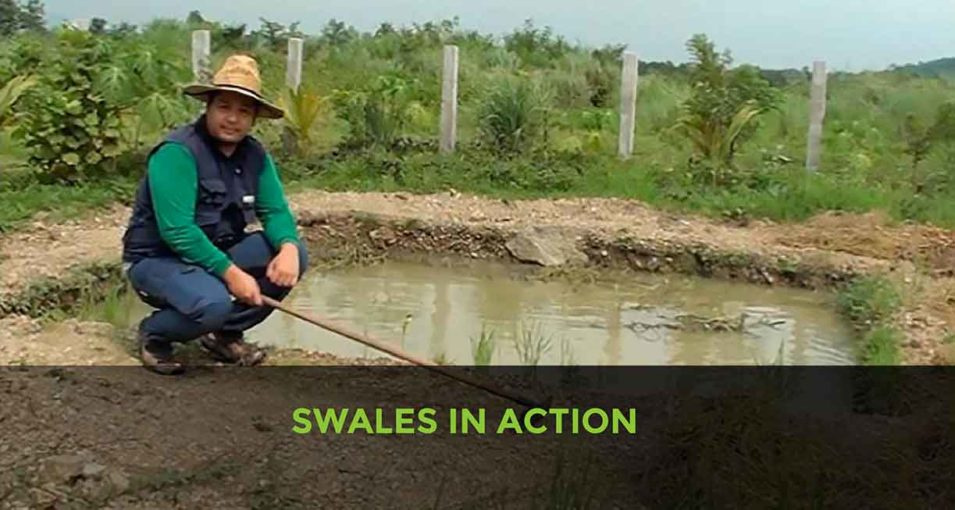 Swales-in-action