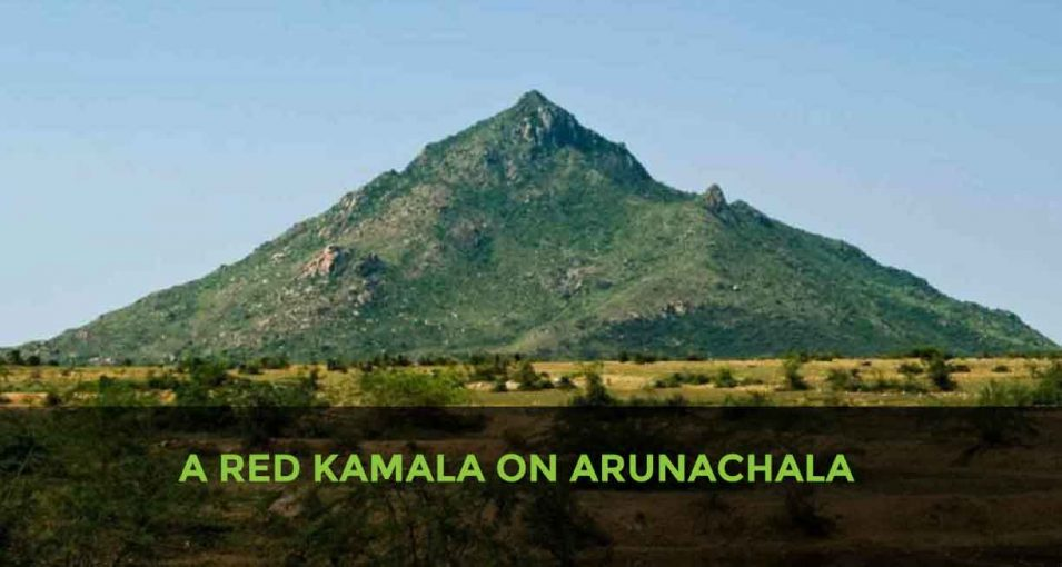 A RED KAMALA ON ARUNACHALA
