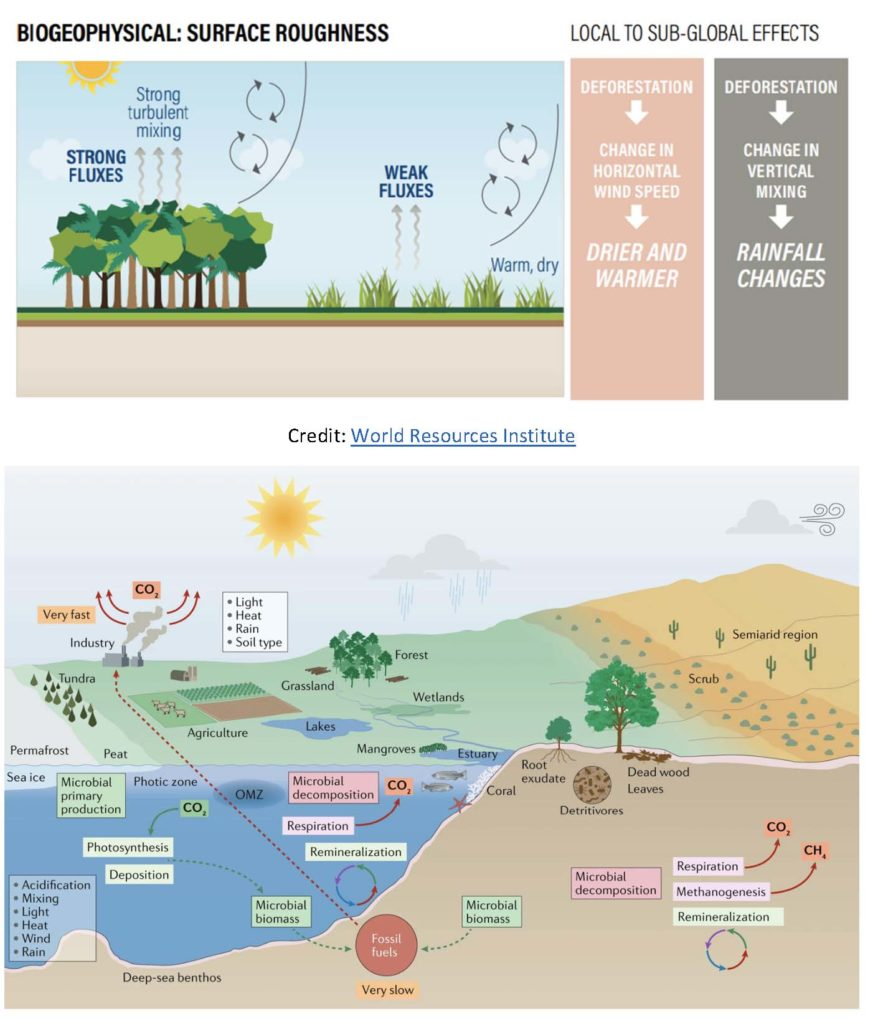 Biogeophysical impacts of tropical deforestation