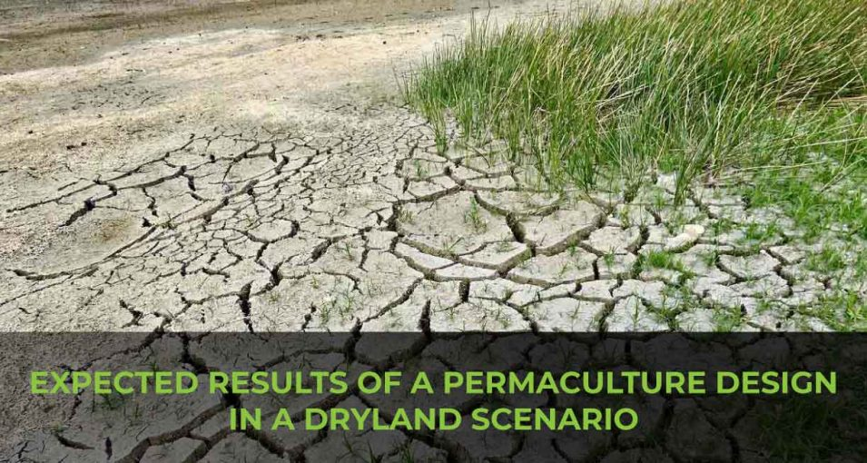 Expected-Results-of-a-Permaculture-Design-in-a-dryland-scenario