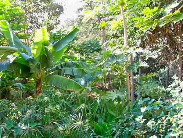 forest_gardens