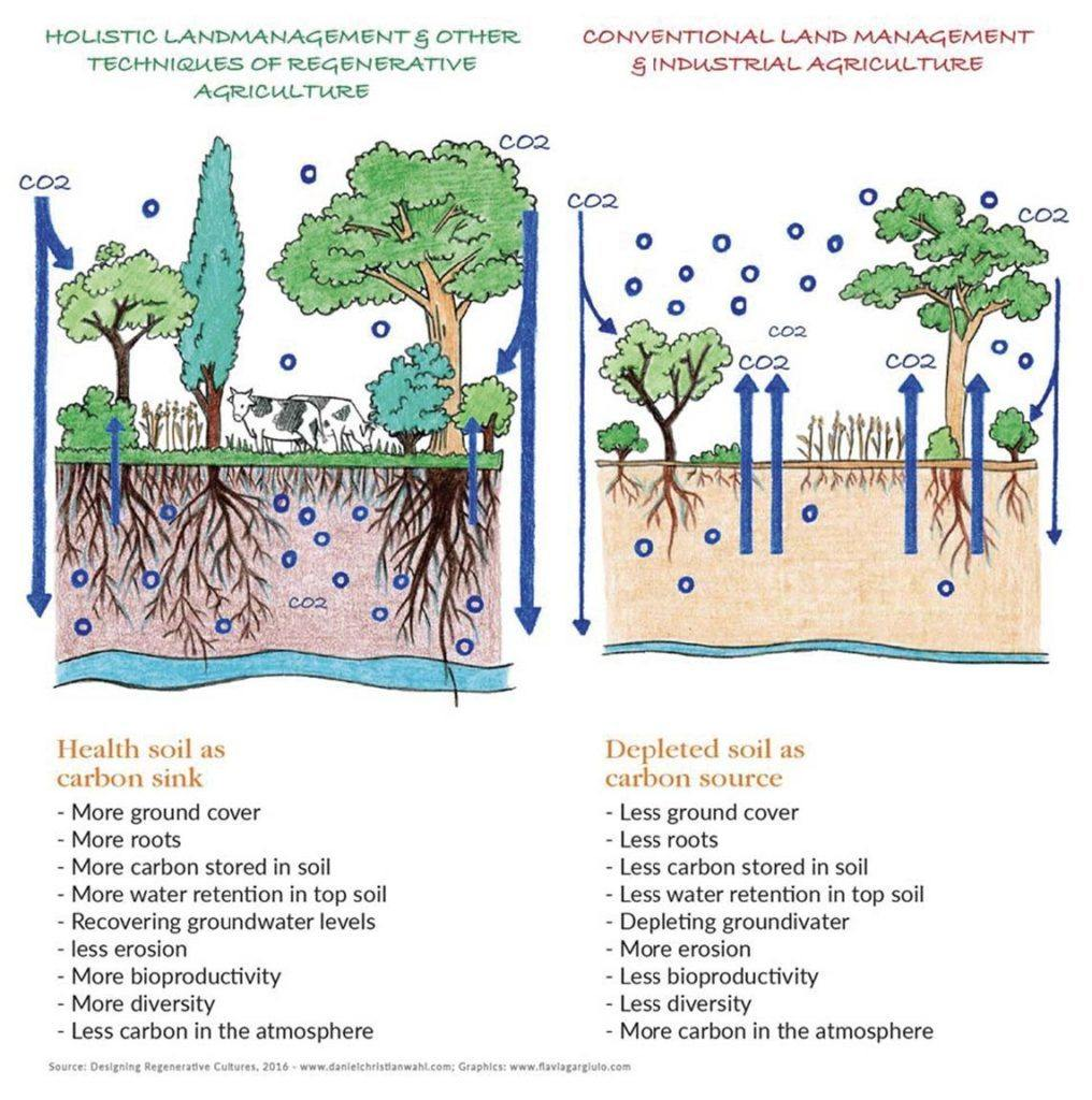 holistic vs conventional land management
