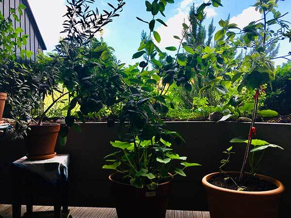 permaculture balcony produce organic food with little effort